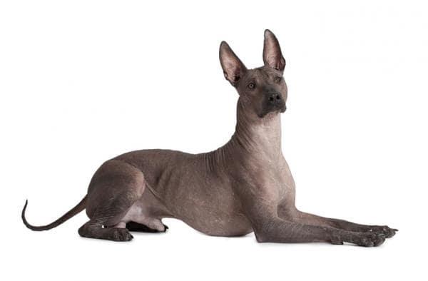 Oh My Dog! Empresa Mexicana