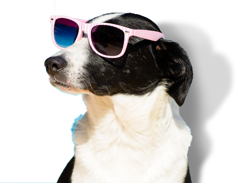 Distribuidor Oh My Dog!